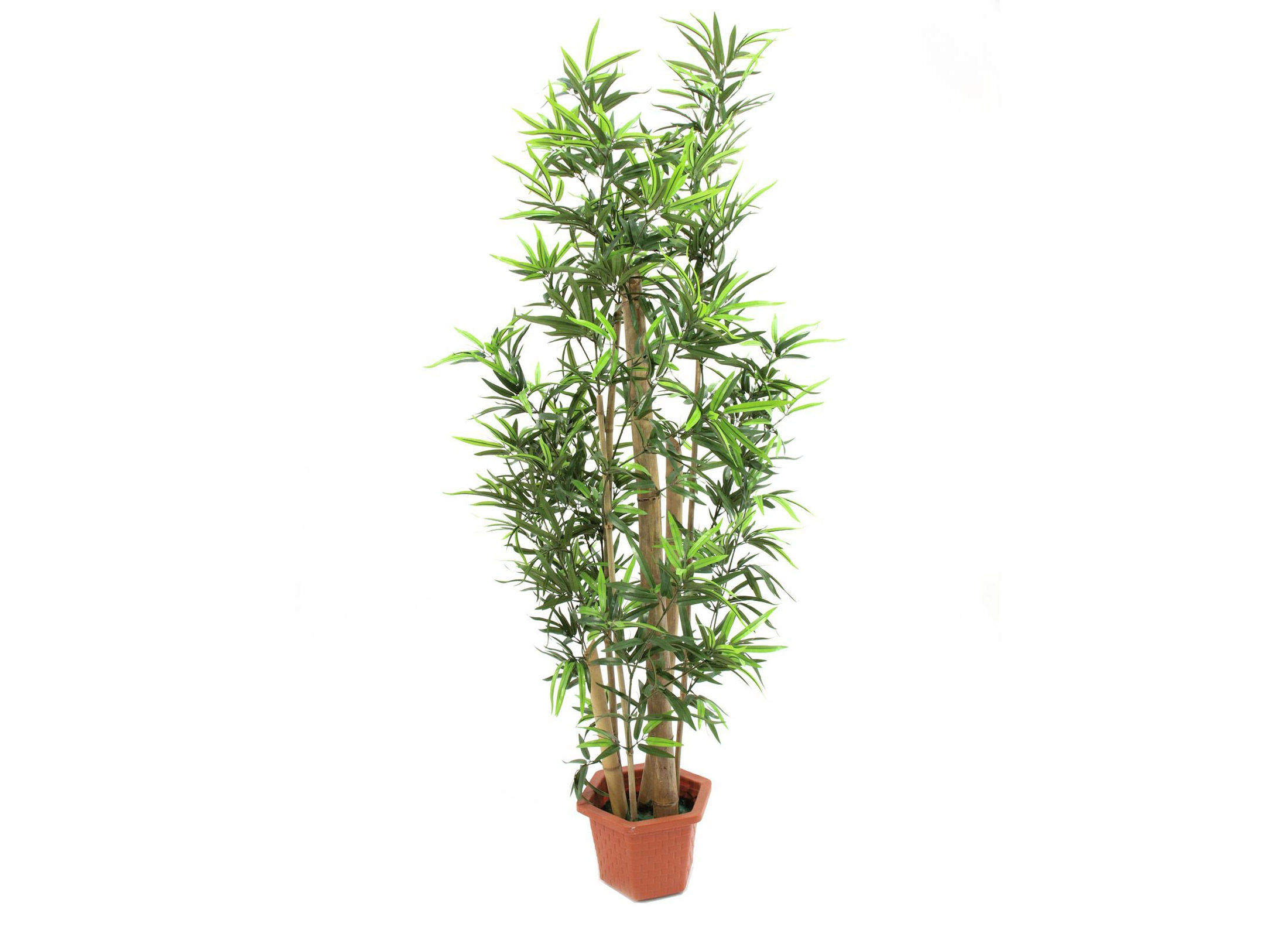 Europalms Bambus Tree 150cm Artificial Plant Online At Low Prices