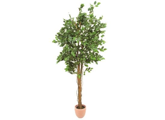 europalms ficus benjamini baum 210cm multi stamm kunstpflanze g nstig online kaufen bei huss. Black Bedroom Furniture Sets. Home Design Ideas