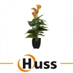 Europalms Calla mini, gelb orange, 43cm, Kunstpflanze